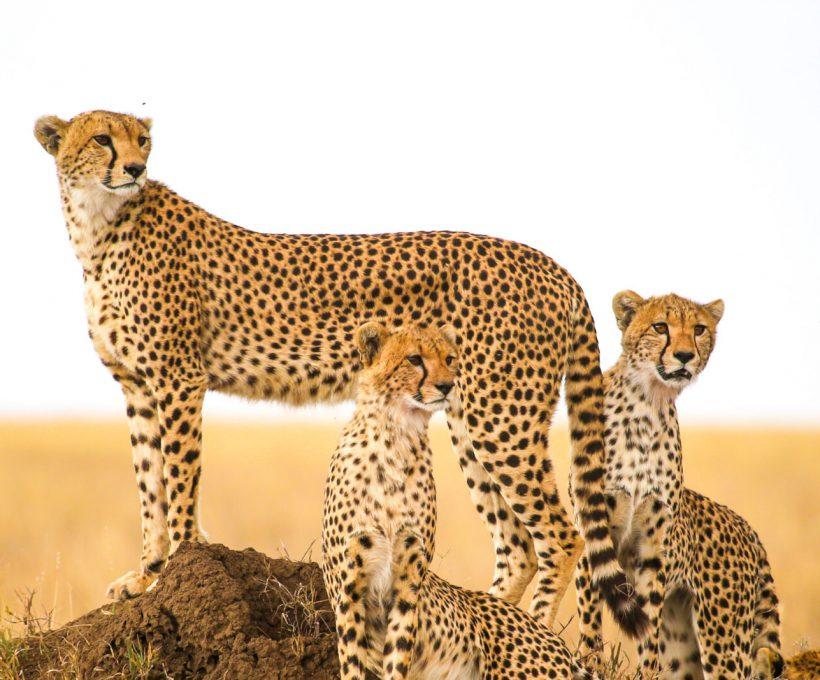 Een rondreis Tanzania